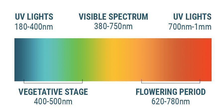 The Light Spectrum And Cannabis