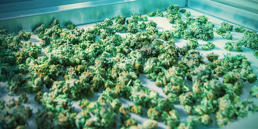Desired Harvest & Ways To Increase Yield