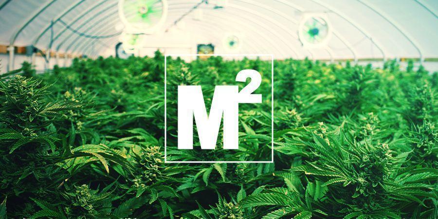 HOW MANY MARIJUANA PLANTS CAN BE GROWN PER SQUARE METRE?