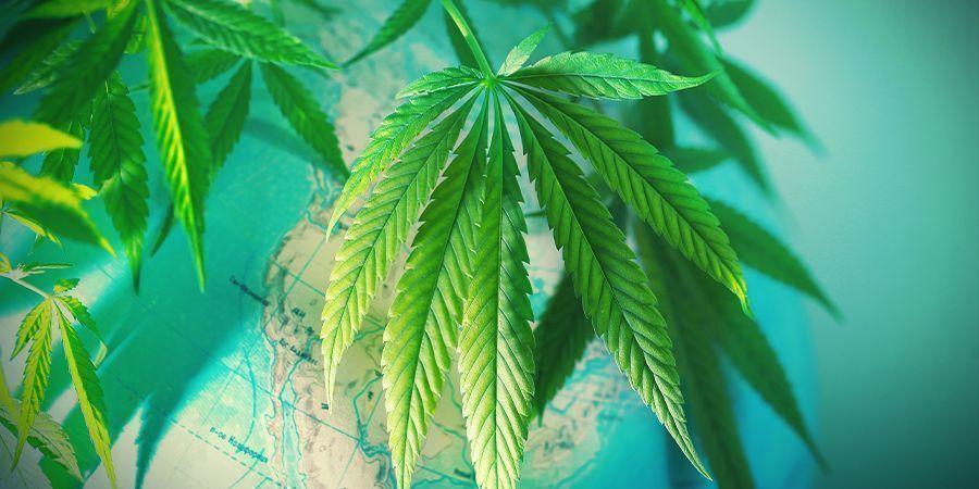 Step 1: Choose The Perfect Cannabis Strain