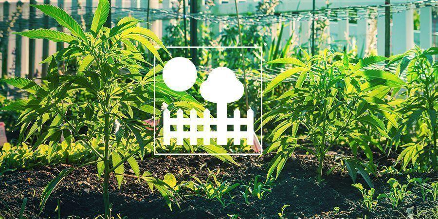 Garden & Backyard Growing