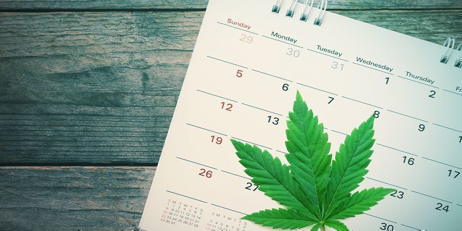 When To Start Your Guerrilla Grow