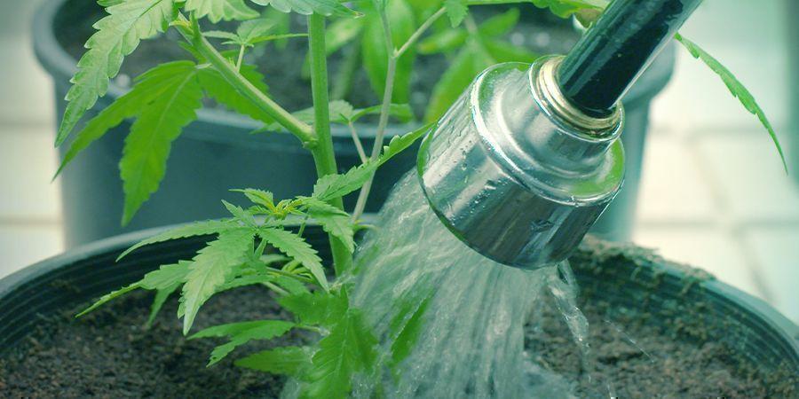 How to Treat Sulphur Toxicity