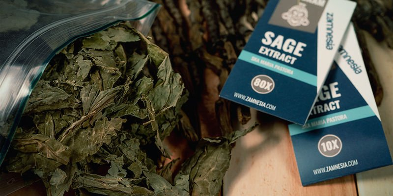 How does Salvia divinorum work?