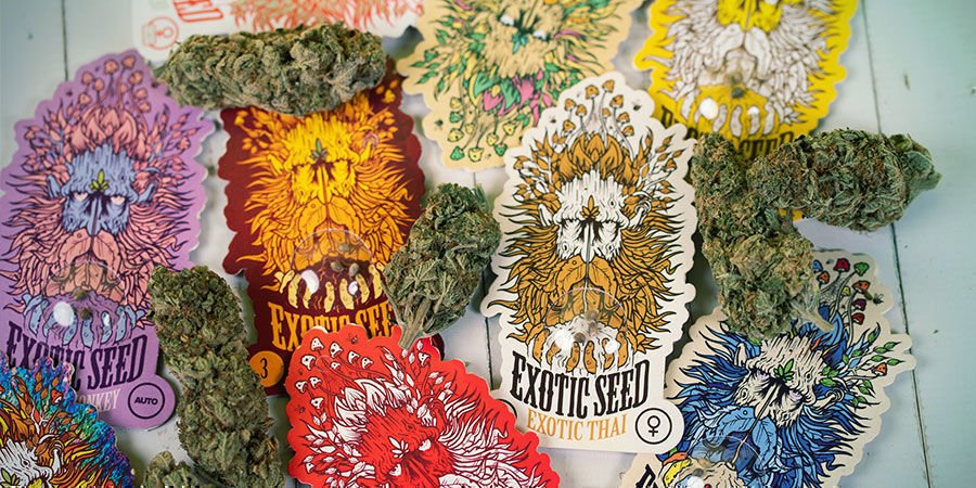 Exotic Seed Cannabis Seeds Package