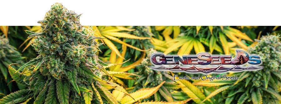 GeneSeeds