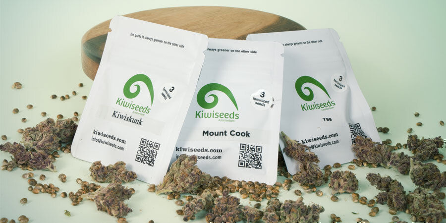 What Are the Top 3 Cannabis Strains by Kiwi Seeds?