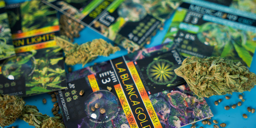 Most Popular Cannabis Seeds By Vision Seeds