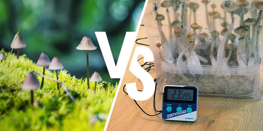 Growing Magic Mushrooms Indoors vs Outdoors