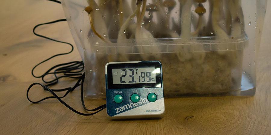 Optimal Relative Humidity for Magic Mushrooms
