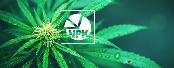 NPK: What Is The Best Ratio For Growing Cannabis
