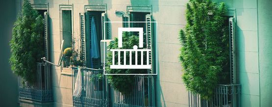 Why Should You Grow Cannabis On Your Balcony Or Terrace?