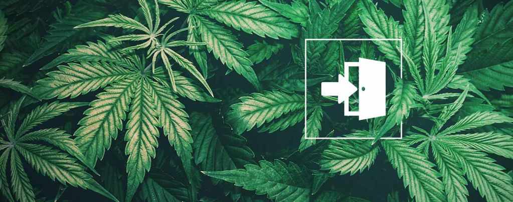 The Best Cannabis Seeds For Indoor Cultivation
