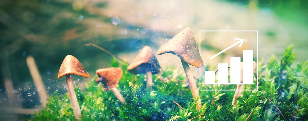 How To Grow Magic Mushrooms Outdoors