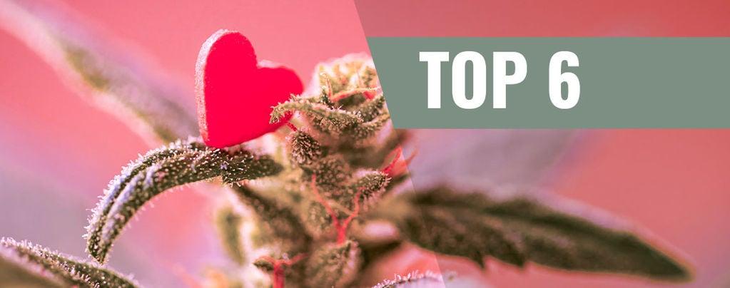 Cannabis Strains For Valentine's Day