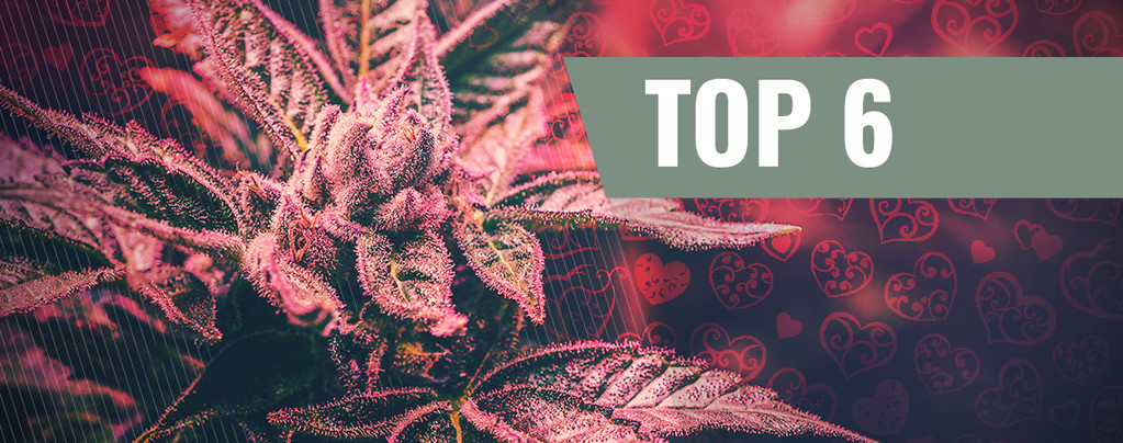 Cannabis Strains For Valentine's Day