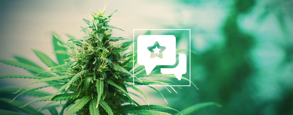 Tangerine Dream: Cannabis Strain Review & Information