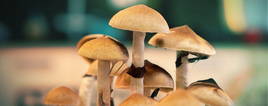Magic Mushroom Grow Kits