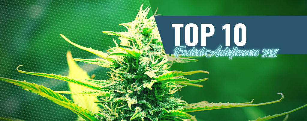 Top 10 Fastest Autoflowers Of 2021