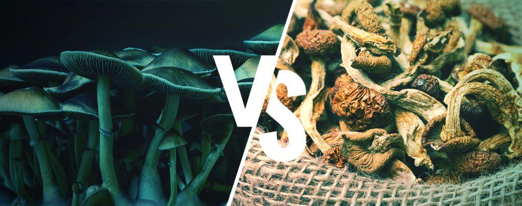 Fresh Vs Dried Magic Mushrooms