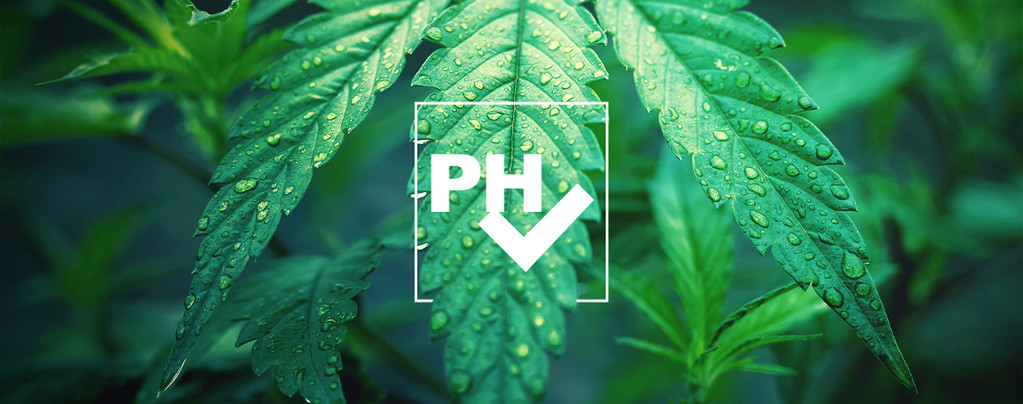 Adjust pH Level Cannabis