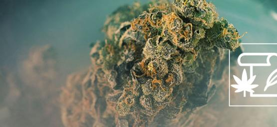The Origin Of Skunk Cannabis & The Top 3 Skunk Strains