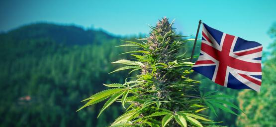 Best Outdoor Cannabis Strains To Grow In The UK