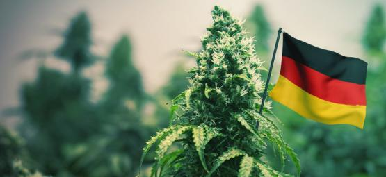 Best Outdoor Cannabis Strains To Grow In Germany
