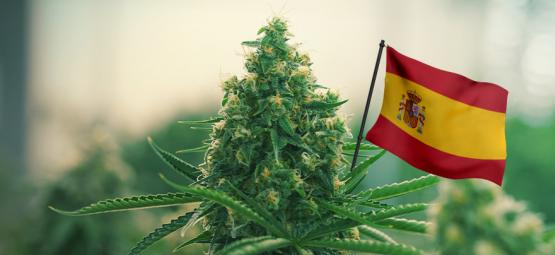 Best Outdoor Cannabis Strains To Grow In Spain