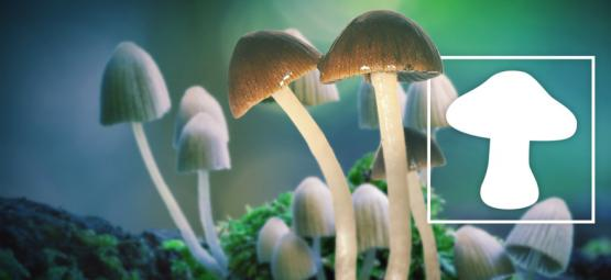 Magic Mushrooms Are The Safest Drug