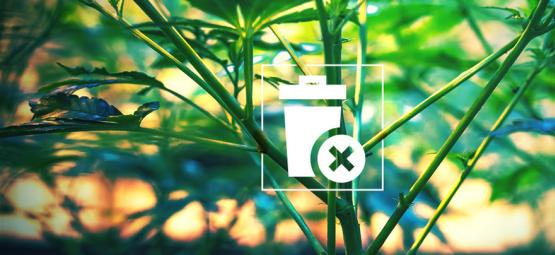 Weed Stems: Don't Throw Them Away!