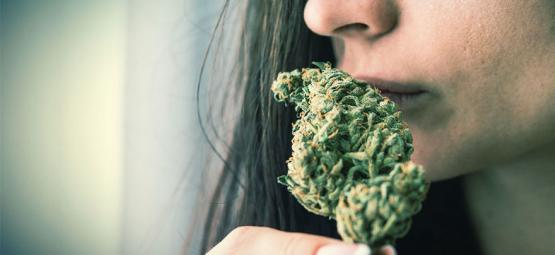 How To Eliminate Cannabis Odour