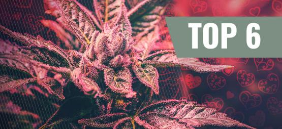Top 6 Valentine's Day Cannabis Strains