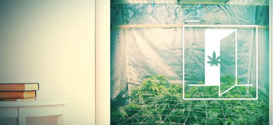 How To Grow Cannabis In Your Closet
