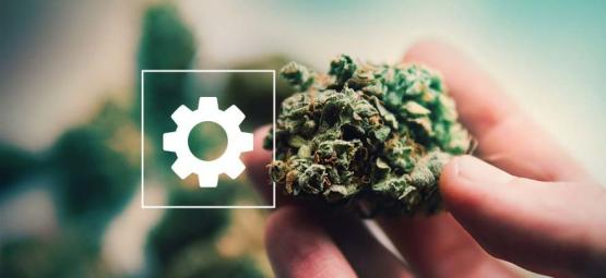Sticky Beast Automatic By Zamnesia Seeds: Post-Harvest Review