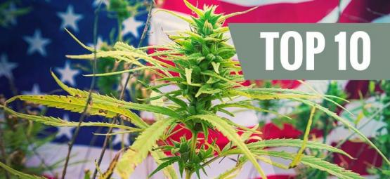 Top 10 Cannabis Strains From The USA