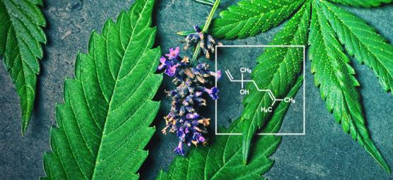 What Is Linalool And How Does It Interact With Cannabis?