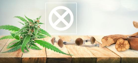Weed, Mushrooms, Ayahuasca Aren't Drugs
