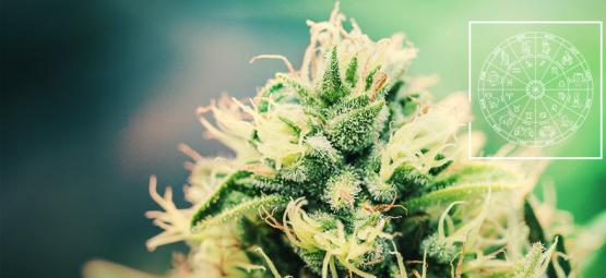 The Perfect Cannabis Strain For Every Zodiac Sign