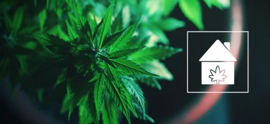How To Grow Cannabis Anywhere In Your Home