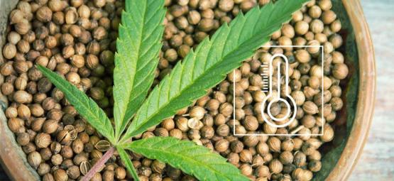 The Best Outdoor Cannabis Seeds Per Climate In Europe