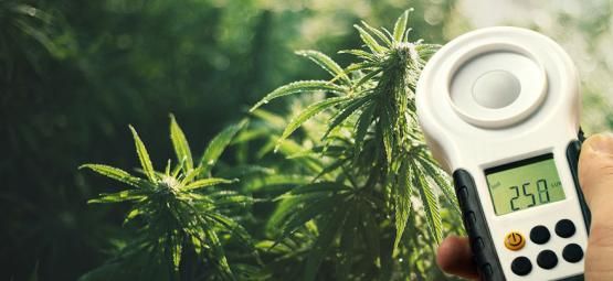 How To Improve Cannabis Yields Using A Lux Meter