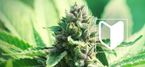 What Do You Need To Start Growing Cannabis?