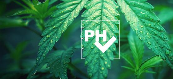 How To Adjust pH Level When Growing Cannabis