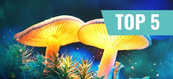 Our Top 5 Documentaries About Magic Mushrooms